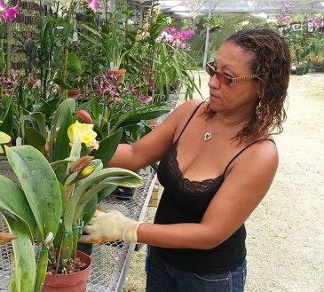 Gladys Lavaud, handling a Cattleya